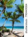 coconut palms on the beach. | Shutterstock . vector #790449004