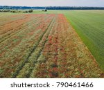 Aerial View Of Red Poppy Field...