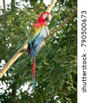 red and green macaw   ara... | Shutterstock . vector #790500673