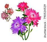 bouquet of flowers pink and... | Shutterstock .eps vector #790524529