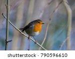robin bird northern ireland | Shutterstock . vector #790596610