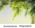 beautiful toned sunlight palm...