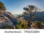 view on crooked tree on stony... | Shutterstock . vector #790652884
