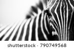 monochrome  shallow depth of... | Shutterstock . vector #790749568