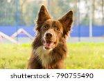 purebred border collie.... | Shutterstock . vector #790755490