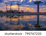 beautiful baobab trees at... | Shutterstock . vector #790767220