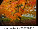 beautiful red maple leaves in... | Shutterstock . vector #790778110
