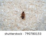 deceased cockroach from means... | Shutterstock . vector #790780153