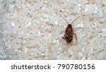 deceased cockroach from means... | Shutterstock . vector #790780156
