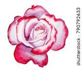 wildflower hybrid rose flower... | Shutterstock . vector #790792633