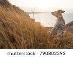 lonely of sabaka in the collar... | Shutterstock . vector #790802293