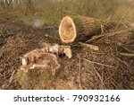 close up view of a felled tree | Shutterstock . vector #790932166