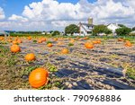 Small photo of Giant pumpkins in Amish Country in Pennsylvania, USA