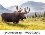 wild moose grazing the... | Shutterstock . vector #790996543