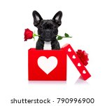 french bulldog dog in love for... | Shutterstock . vector #790996900