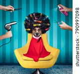 jack russell dog  at the... | Shutterstock . vector #790997098