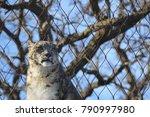 a snow leopard | Shutterstock . vector #790997980