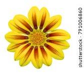 gazania sun flower on white... | Shutterstock . vector #791006860