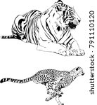 vector drawings sketches... | Shutterstock .eps vector #791110120