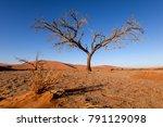 dead tree in sossusvlei near... | Shutterstock . vector #791129098