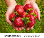 Big Red Strawberries In The...