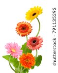 Stock photo beautiful bouquet of gerbera flower isolated on white background 791135293
