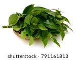 fresh green tea leaves ... | Shutterstock . vector #791161813