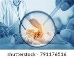 double exposure of veterinarian ... | Shutterstock . vector #791176516