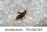 deceased cockroach from means... | Shutterstock . vector #791181769