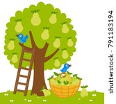 pear tree  a ladder and a... | Shutterstock . vector #791183194