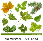 vector collection of leaves | Shutterstock .eps vector #79118653