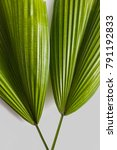 green tropical leaves on grey... | Shutterstock . vector #791192833
