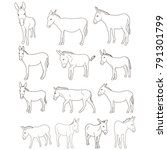 vector  isolated donkey sketch... | Shutterstock .eps vector #791301799