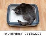 cat using toilet  cat in litter ... | Shutterstock . vector #791362273