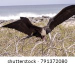 nesting colony of magnificent... | Shutterstock . vector #791372080