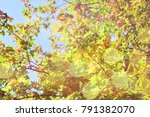 autumn background with effect. | Shutterstock . vector #791382070