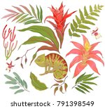 collection of tropical hand... | Shutterstock .eps vector #791398549