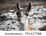 portrait close up of cute... | Shutterstock . vector #791417788