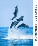 group of dolphins jumping on... | Shutterstock . vector #791424589