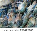 river shrimp  giant river... | Shutterstock . vector #791479903