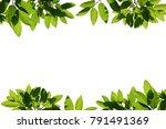 tree branch frame isolated | Shutterstock . vector #791491369