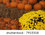 Gold Chrysanthemums And...