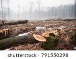 deforestation  destruction of... | Shutterstock . vector #791550298