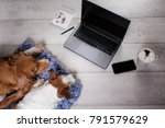 Two Dogs Using The Laptop And...
