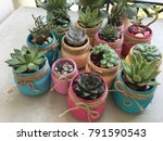 Lots Of Small Cactus Succulents ...