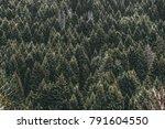conifer green wood forest.... | Shutterstock . vector #791604550