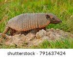 funny portrait of armadillo ... | Shutterstock . vector #791637424