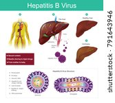 hepatitis b virus. the virus is ... | Shutterstock .eps vector #791643946