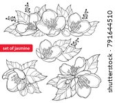 vector set with outline jasmine ... | Shutterstock .eps vector #791644510