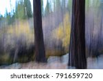 abstract image of ponderosa... | Shutterstock . vector #791659720
